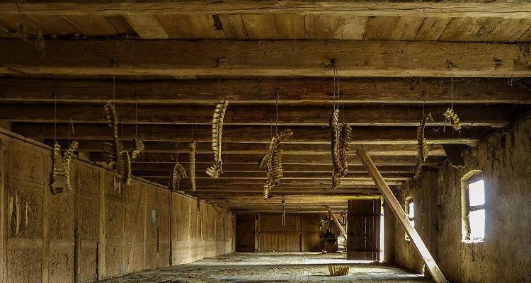Haus des Doggenzüchters
